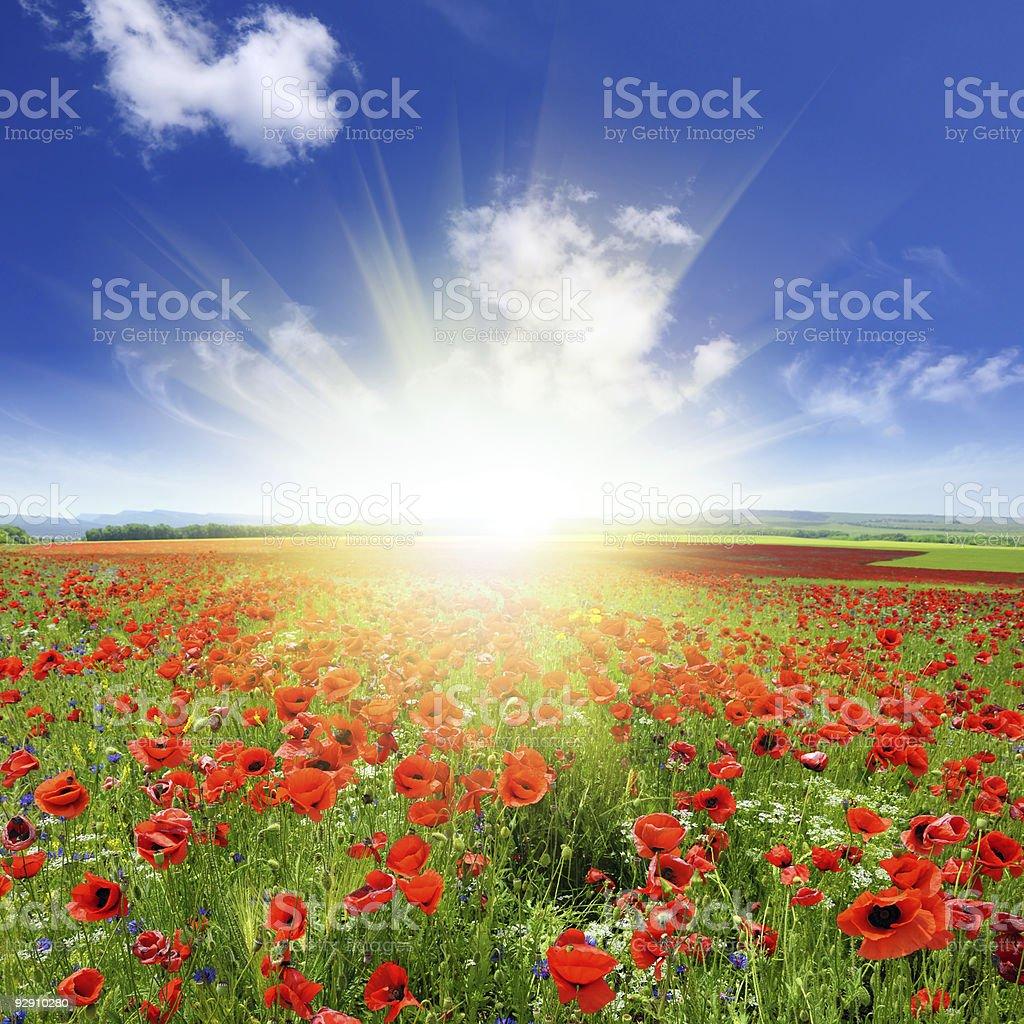 Sunrise over Poppy Field royalty-free stock photo