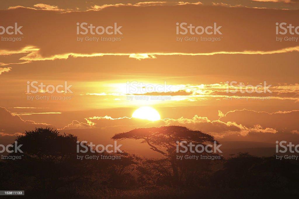 Sunrise over Serengeti royalty-free stock photo
