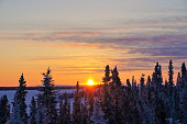 Sunrise Over Snow Covered Trees in Yellowknife