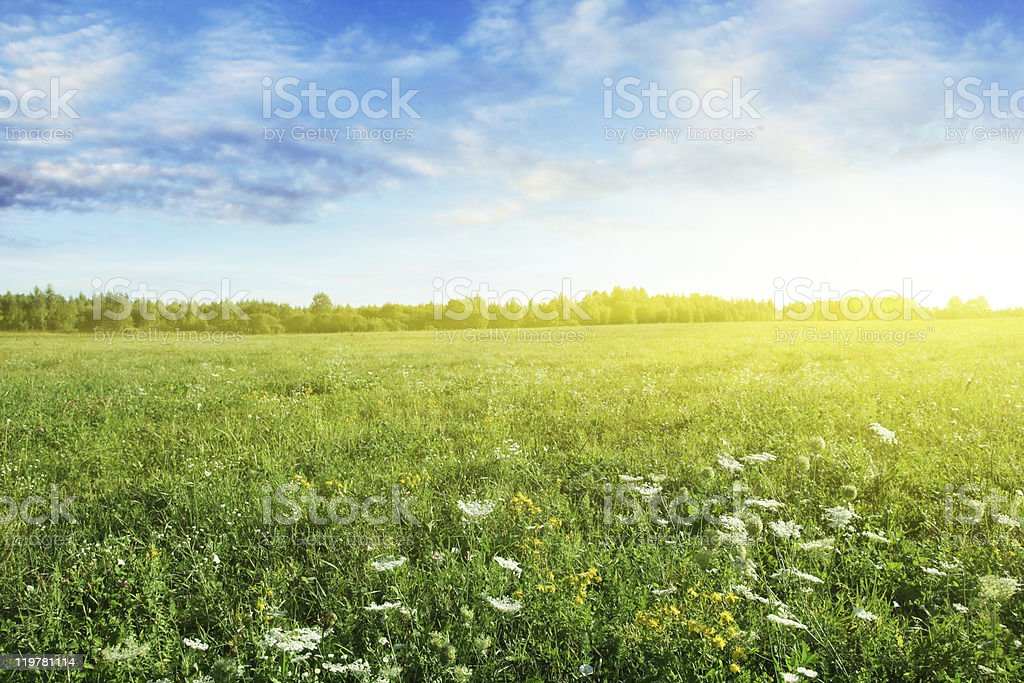 Sunrise over summer meadow. stock photo