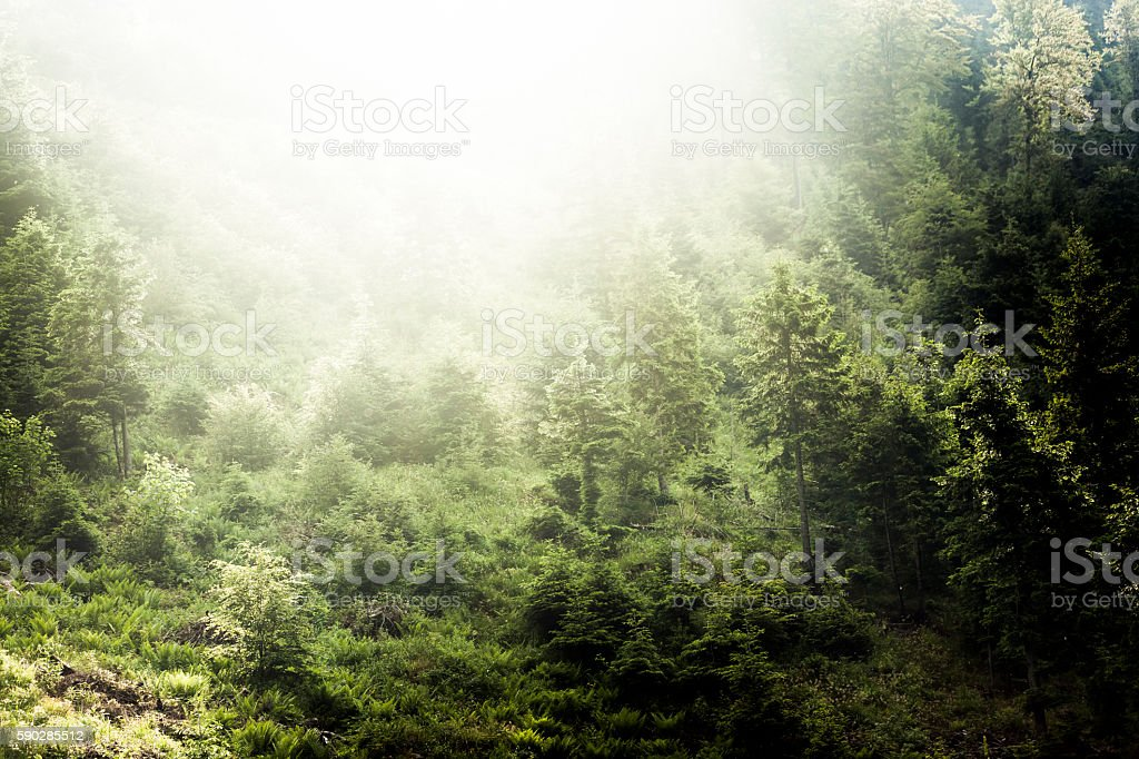 Sunrise over the carpathian forest stock photo