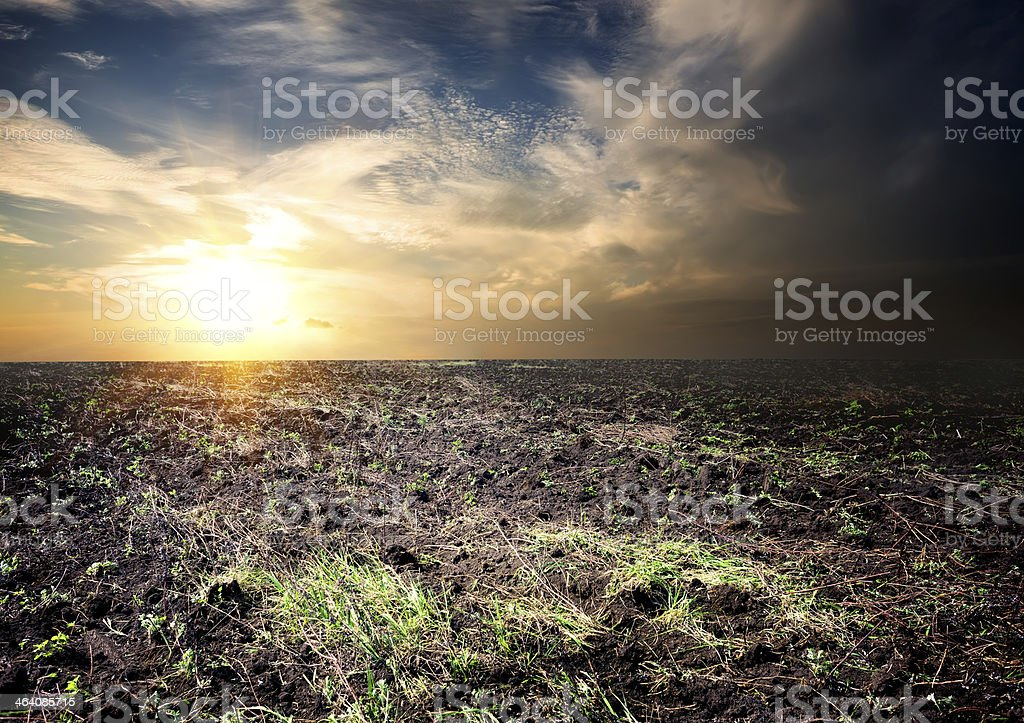 Sunrise over the cultivated field stock photo