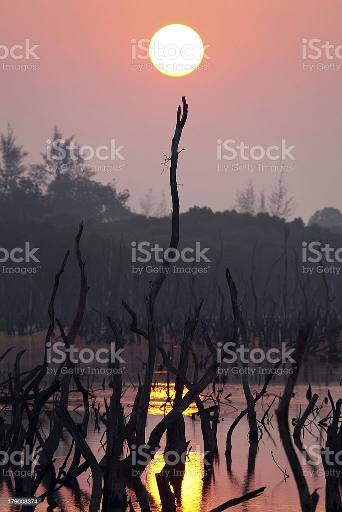Sunrise over the dead trees royalty-free stock photo