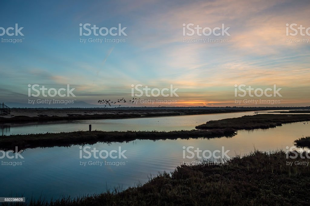 Sunrise over the wetlands stock photo