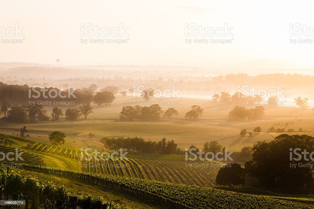 Sunrise over vineyards stock photo