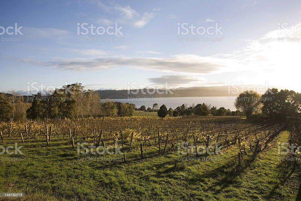 sunrise over winery stock photo