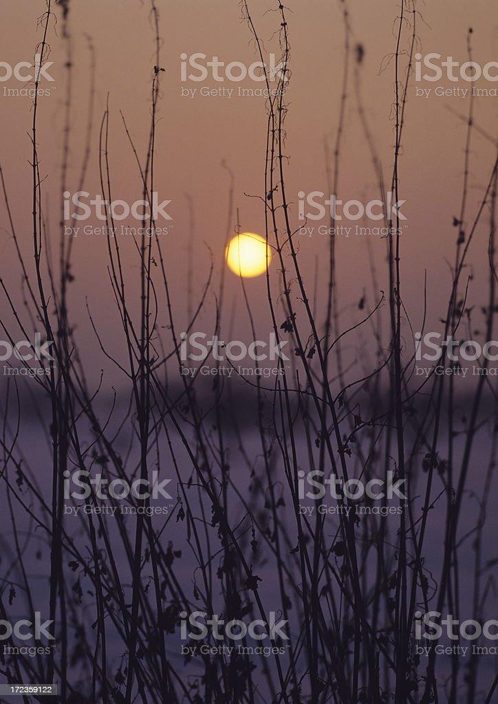 Sunrise (image size XXL) royalty-free stock photo