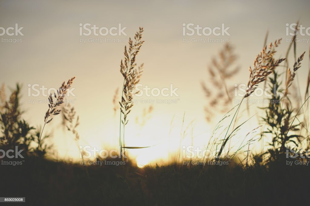 Sunrise plant silhouette in front of the sun stock photo