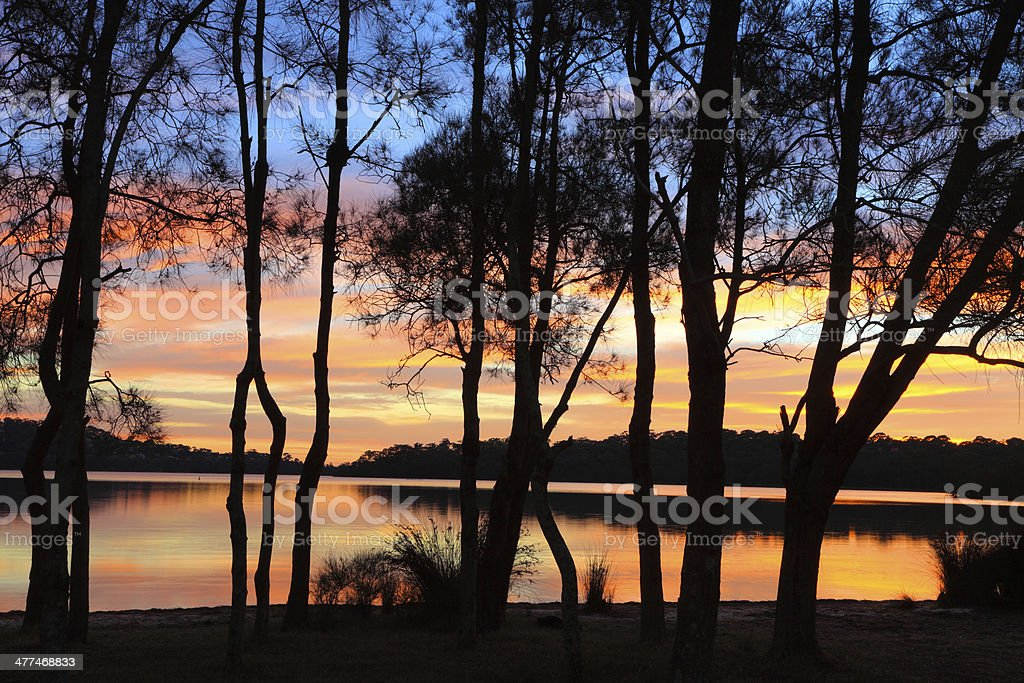 Sunrise reflections and Casuarina silhouettes at the Lagoon stock photo