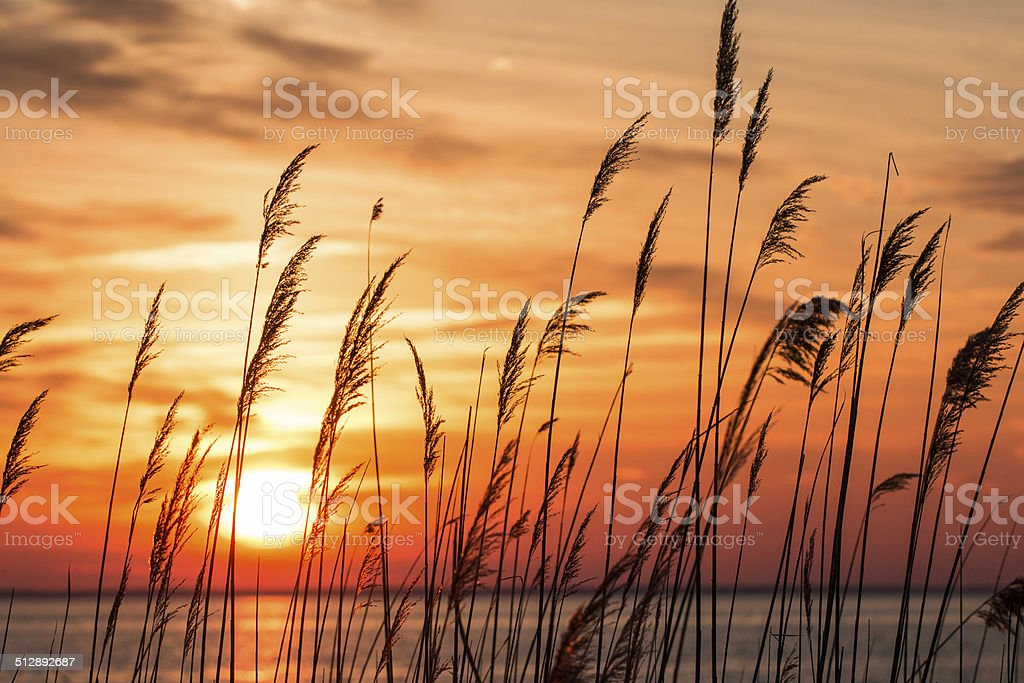 Sunrise Reflections stock photo