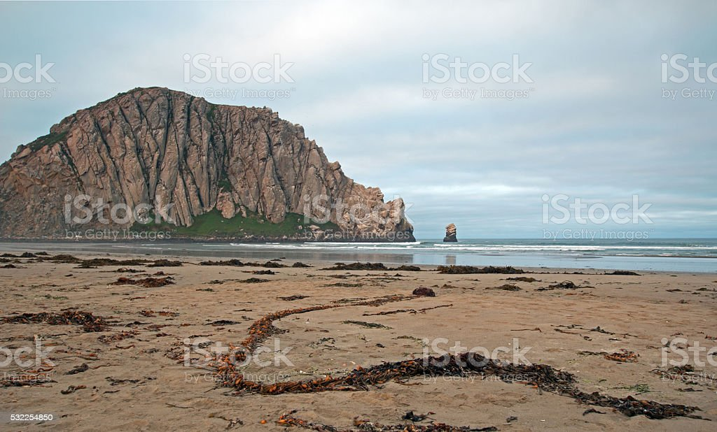 Sunrise Serpentine Sea Kelp at Morro Rock stock photo