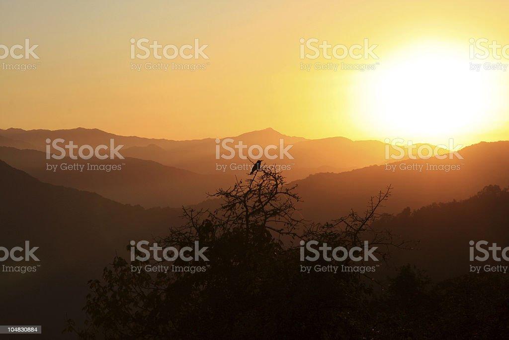 Sunrise silhouette royalty-free stock photo
