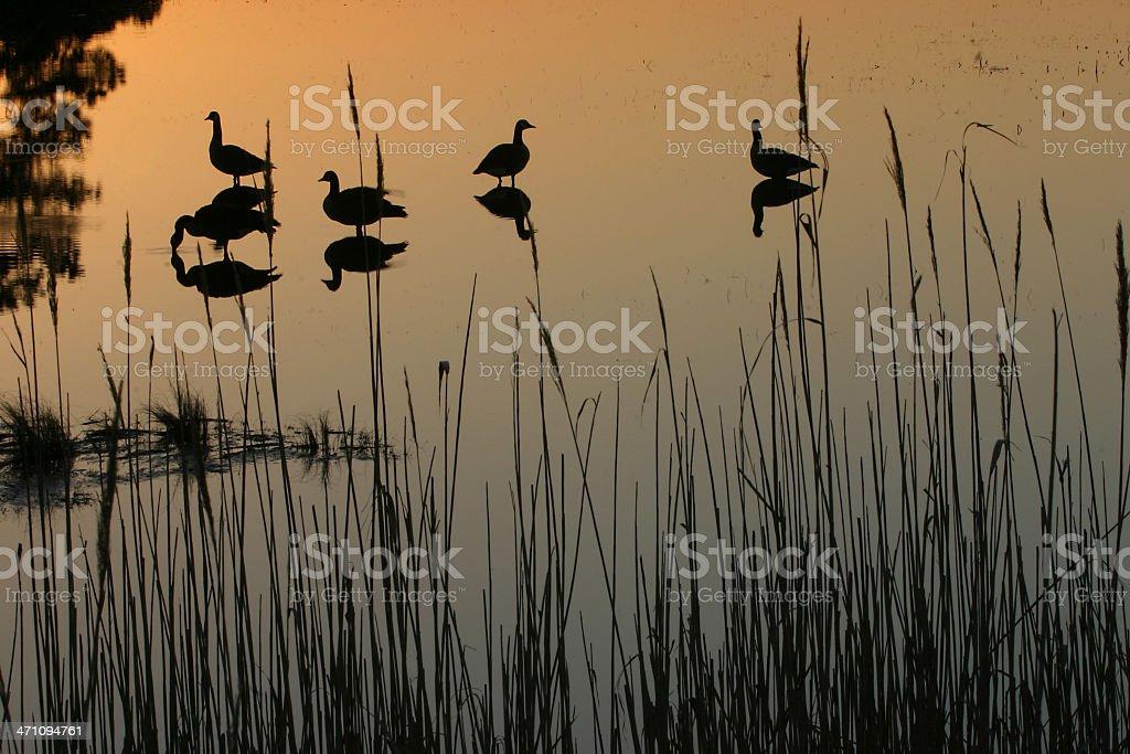 sunrise silhouettes stock photo