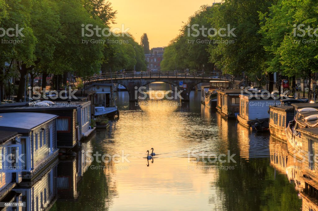 Sunrise swans Amsterdam stock photo