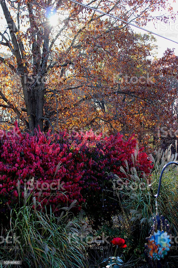 Sunrise & The Burning Bush stock photo