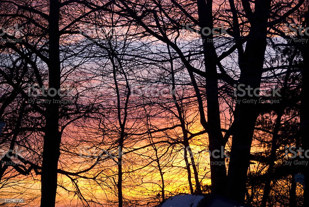 Sunrise through Trees royalty-free stock photo