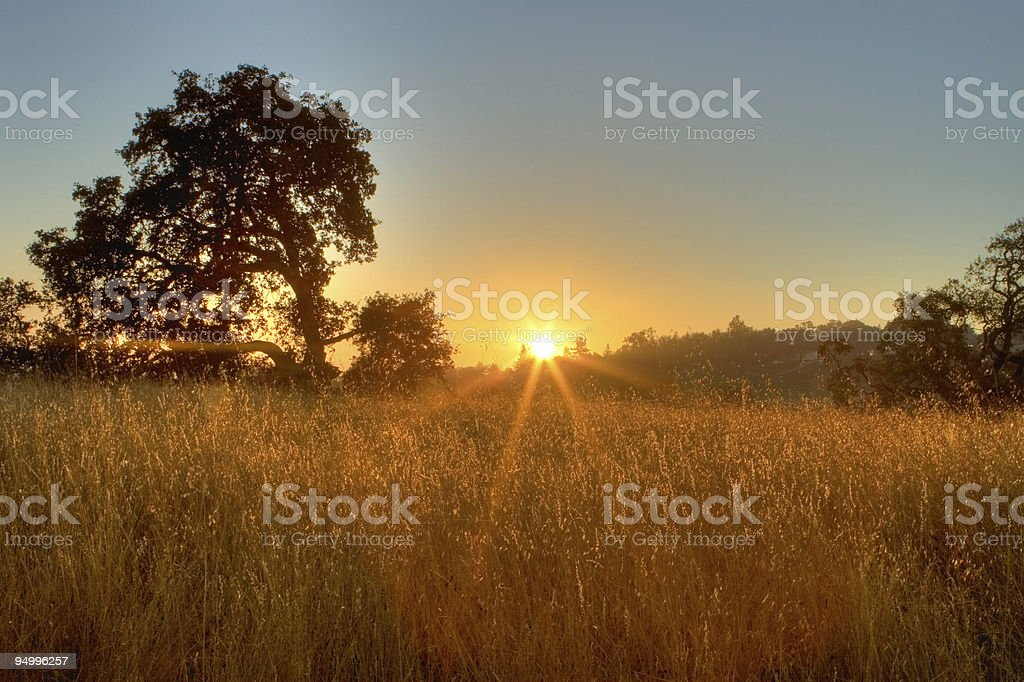 Sunrise with a tree - HDR Photo royalty-free stock photo