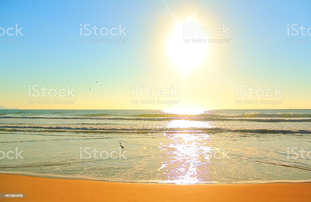 Sunrise with bird. stock photo