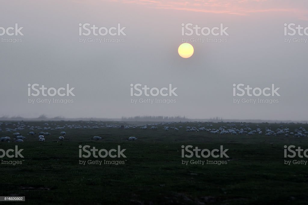 Sunrise with birds stock photo