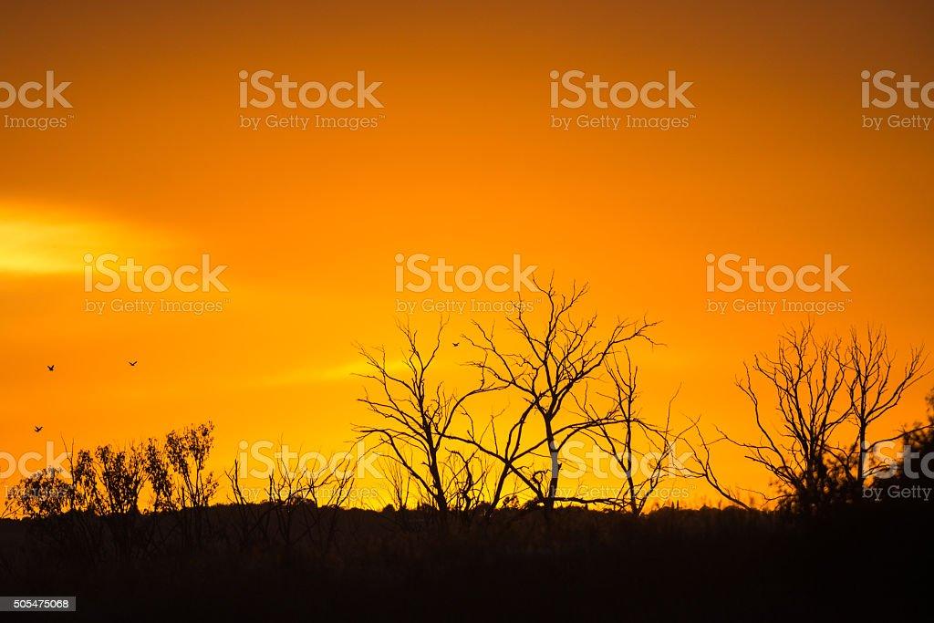Sunrise with trees on skyline stock photo