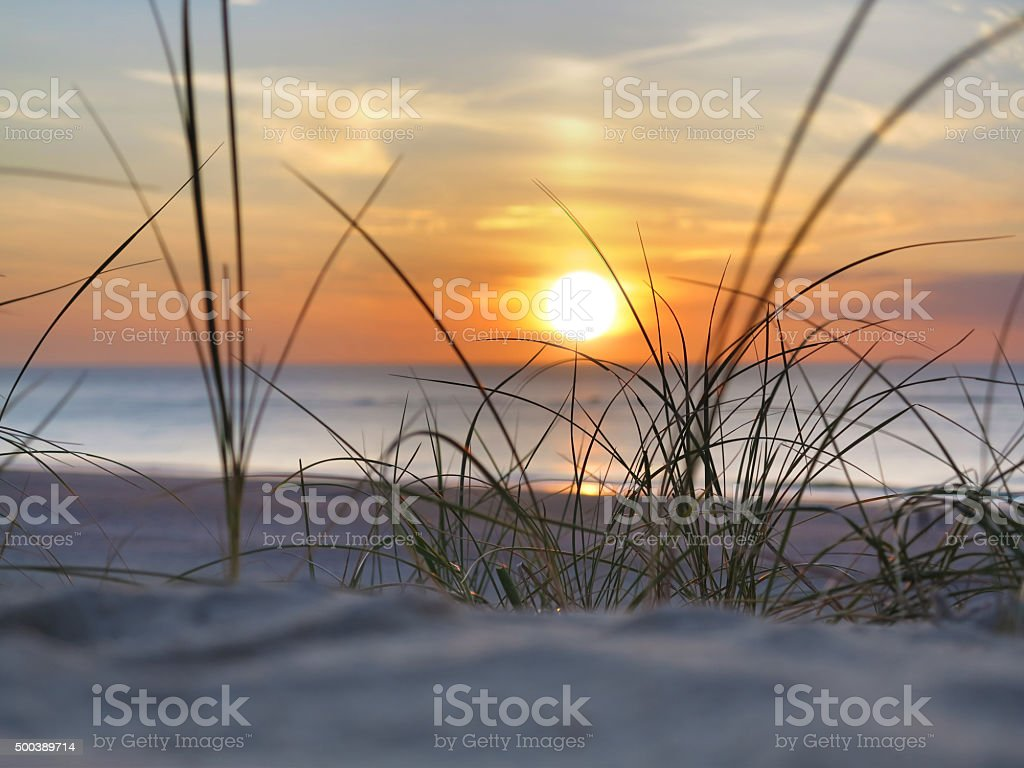 sunset and beach grass stock photo