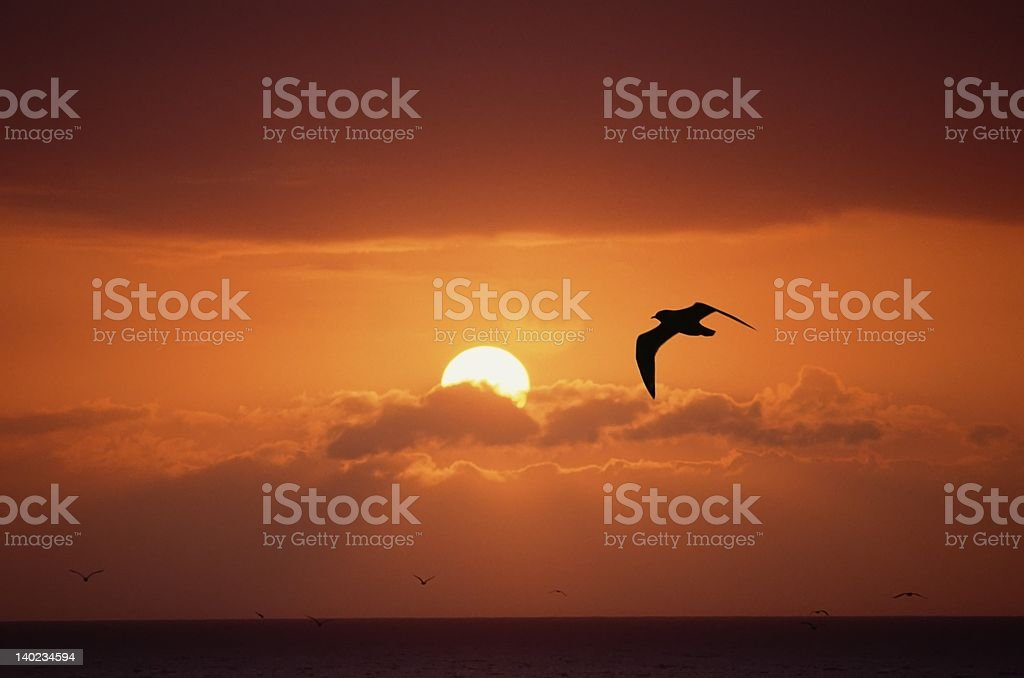sunset and bird royalty-free stock photo