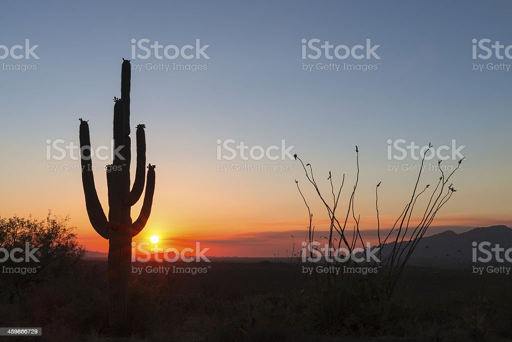 Sunset and cactus royalty-free stock photo