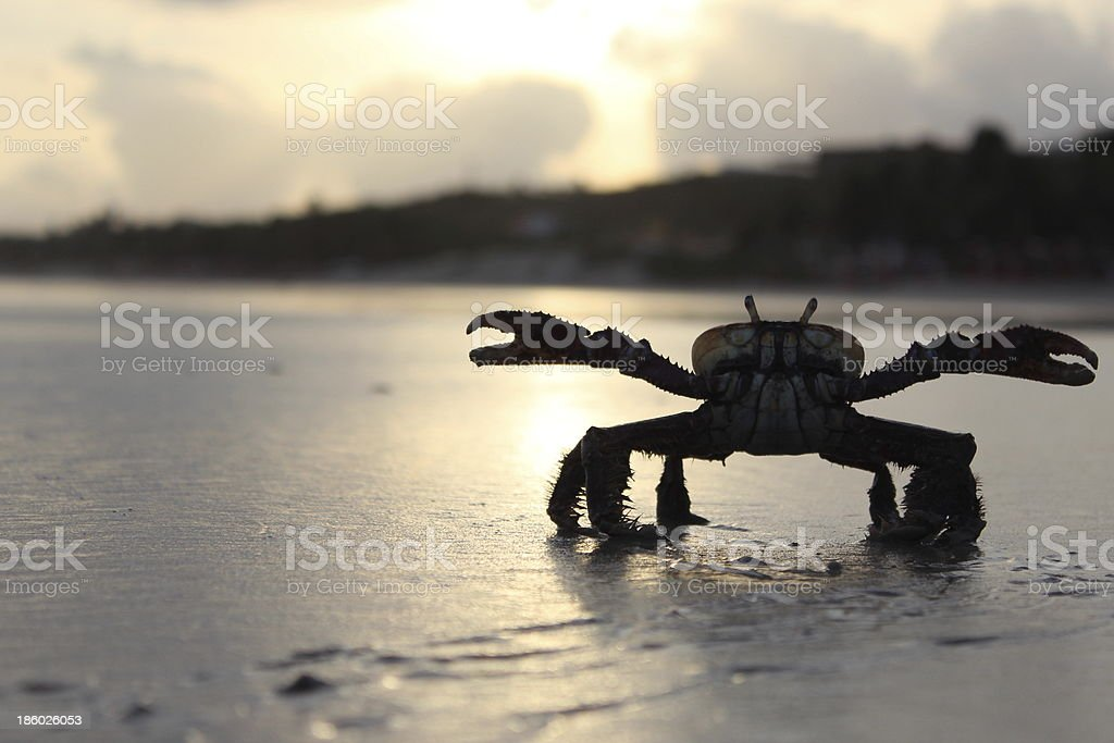 sunset and Crab in S?o Lu?s - Brazil stock photo