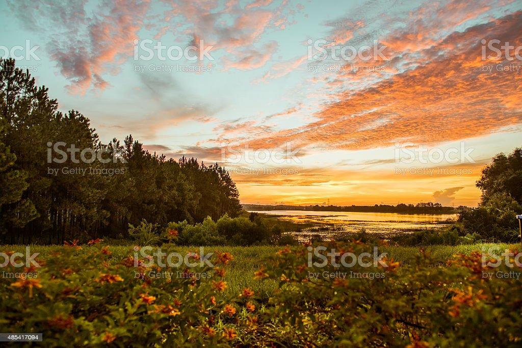 Coucher du soleil et de fleurs photo libre de droits