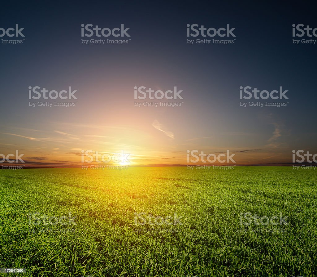 sunset and green field royalty-free stock photo