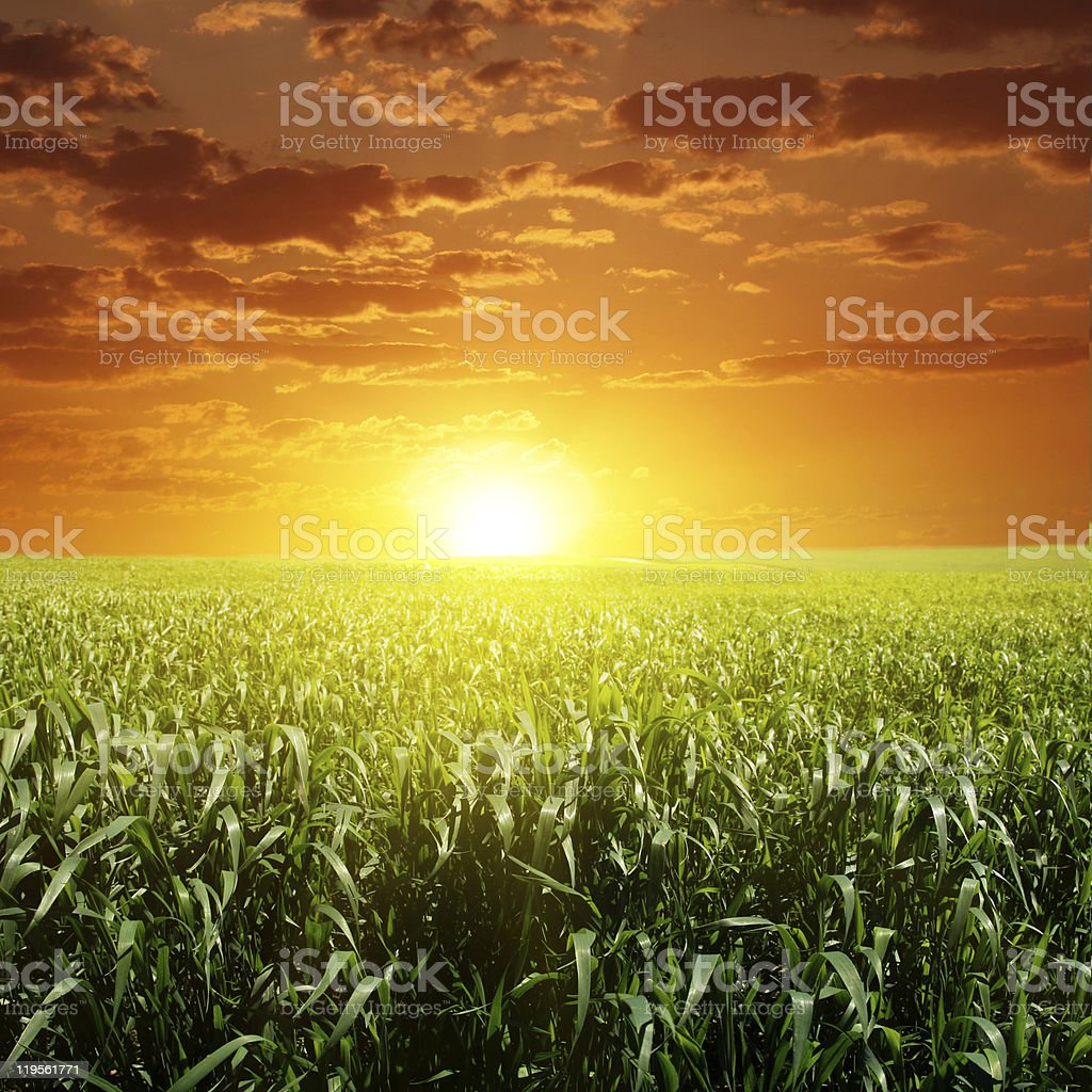 Sunset and green grass. royalty-free stock photo