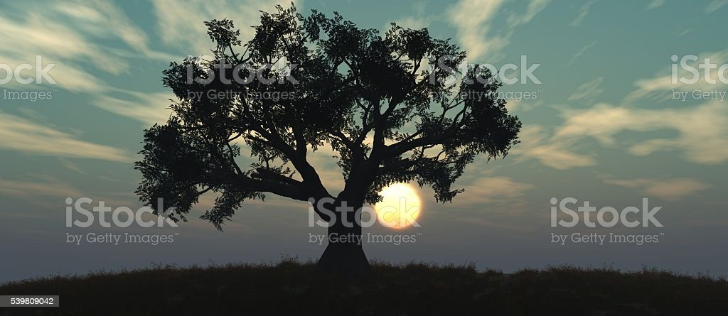 sunset and tree stock photo