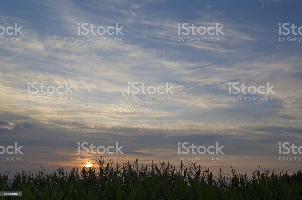 Sunset as background stock photo