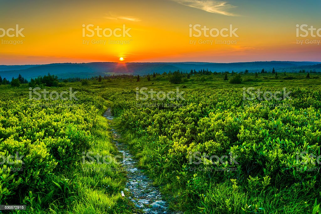 Sunset at Dolly Sods Wilderness, Monongahela National Forest, We stock photo