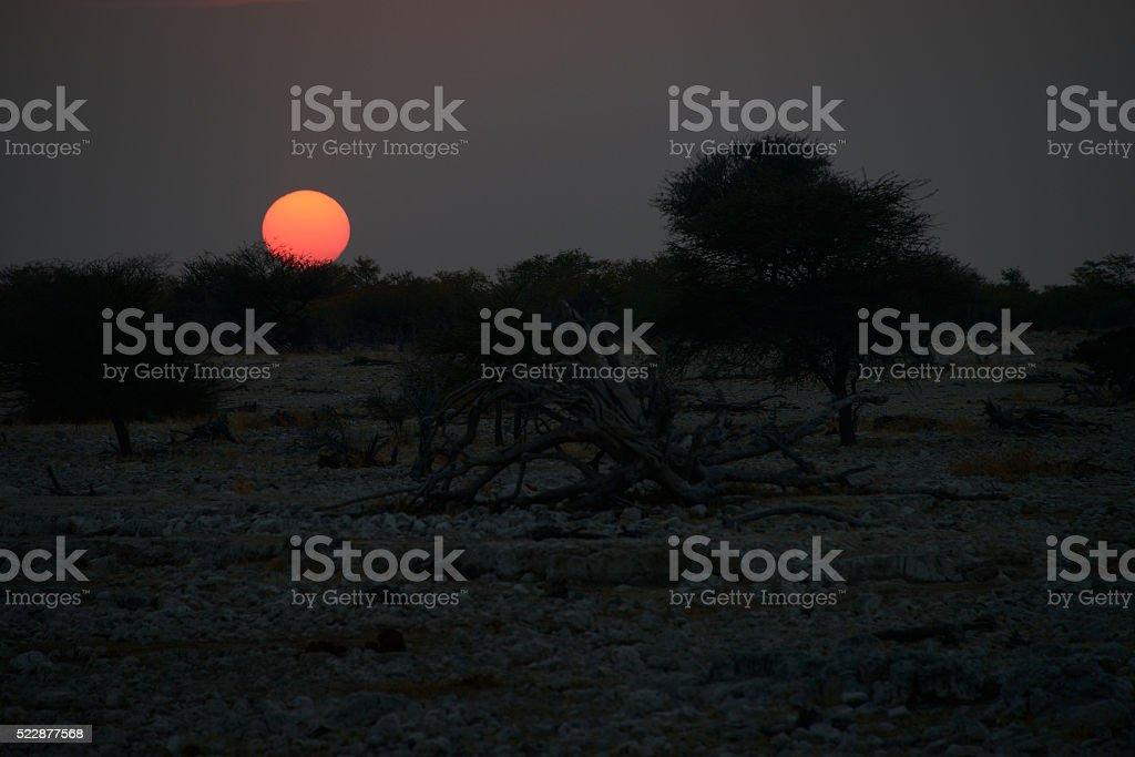 Sunset at Etosha National Park, Namib, Namibia stock photo