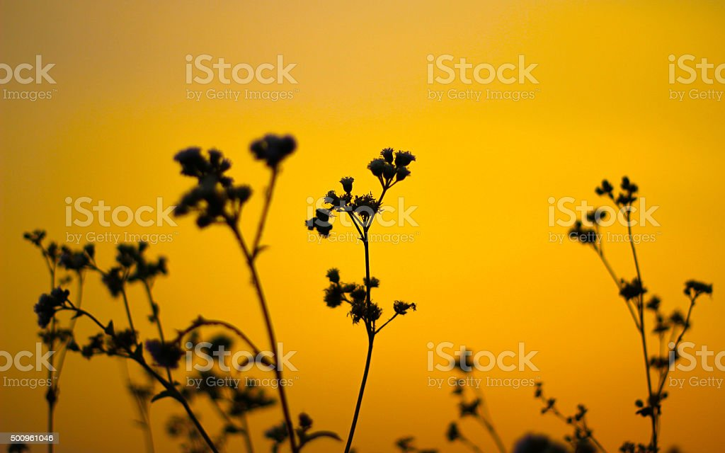 Sunset at grass field stock photo