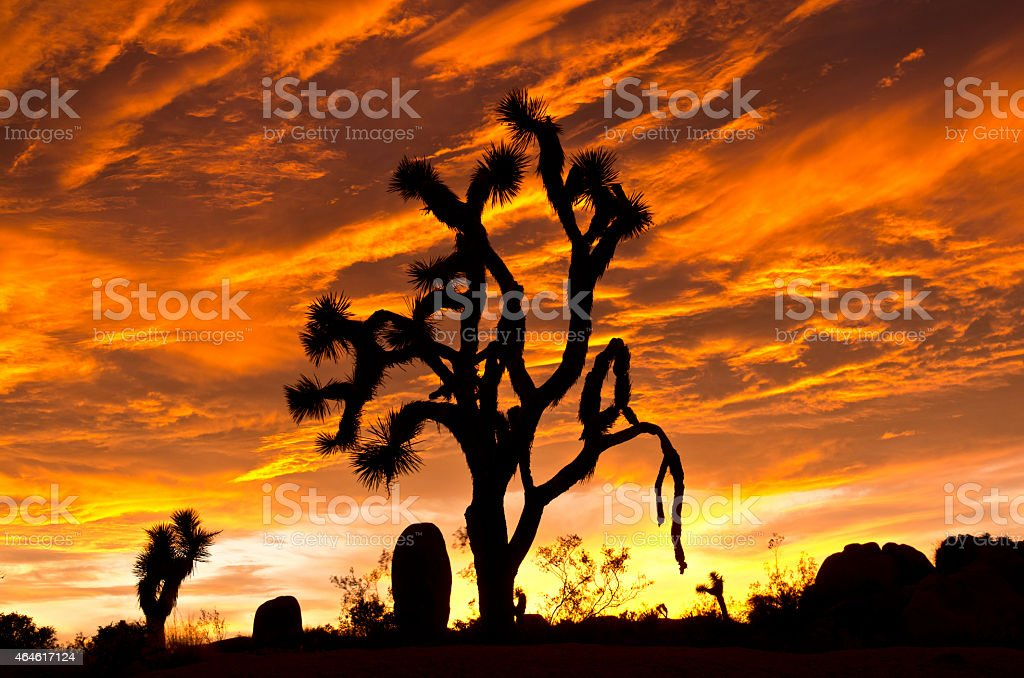 Sunset at Joshua Tree National Park stock photo