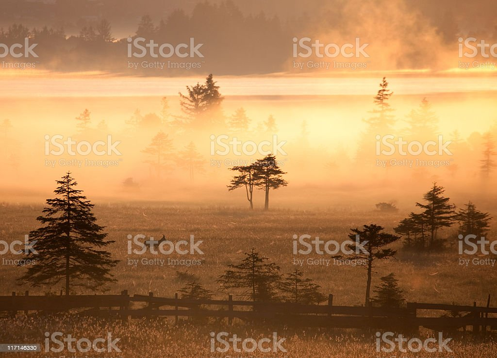 sunset at lake banwaldsee- bavaria with deer stock photo
