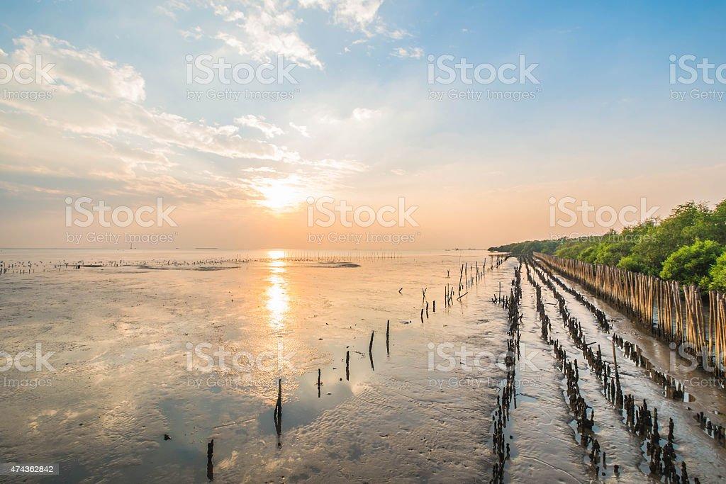 sunset at mangrove forest, Bangpu Thailand stock photo