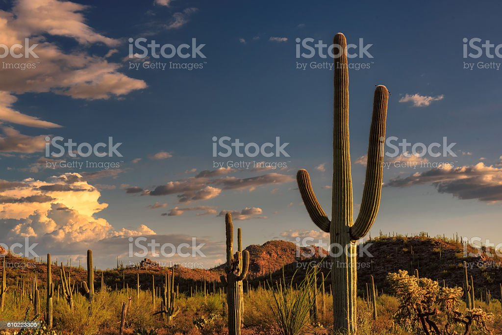Sunset at Saguaro National Park, Arizona stock photo