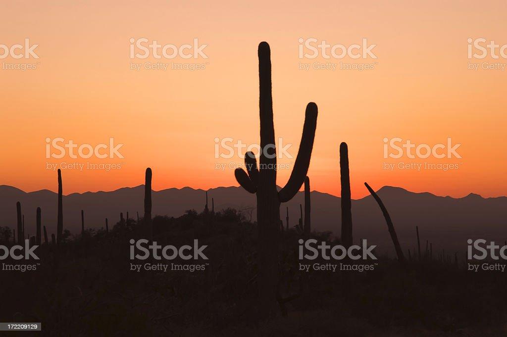 Sunset at Saguaro royalty-free stock photo