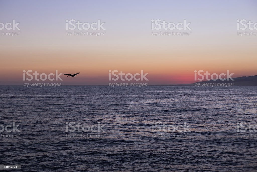 sunset at Santa Monica with a pelican royalty-free stock photo