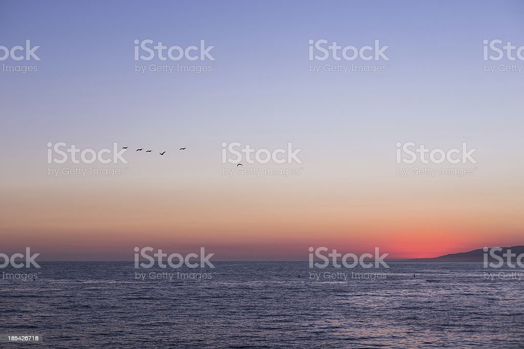 sunset at Santa Monica with seagulls royalty-free stock photo