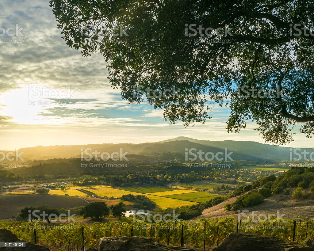 Sunset at Sonoma California patchwork vineyard at harvest stock photo