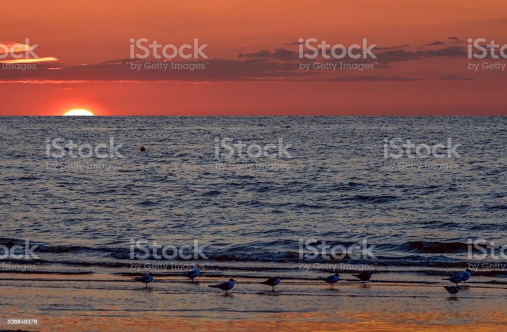 Sunset at the Baltic sea, Jurmala,Latvia stock photo