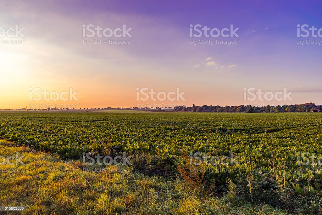 Sunset at the field stock photo