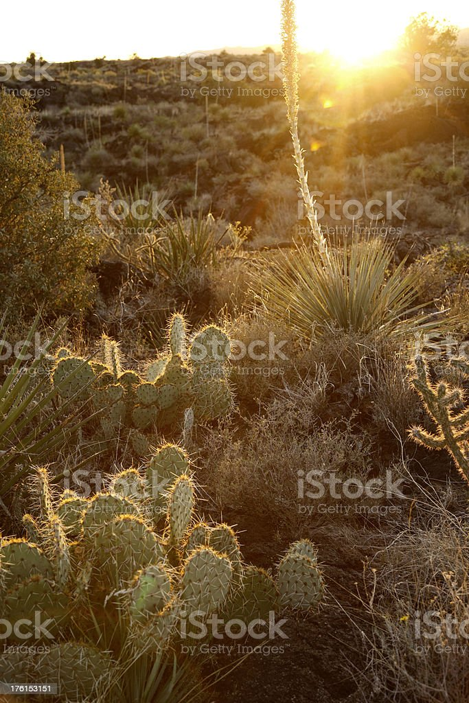 Sunset at Valley of Fires Recreation Area in New Mexico stock photo