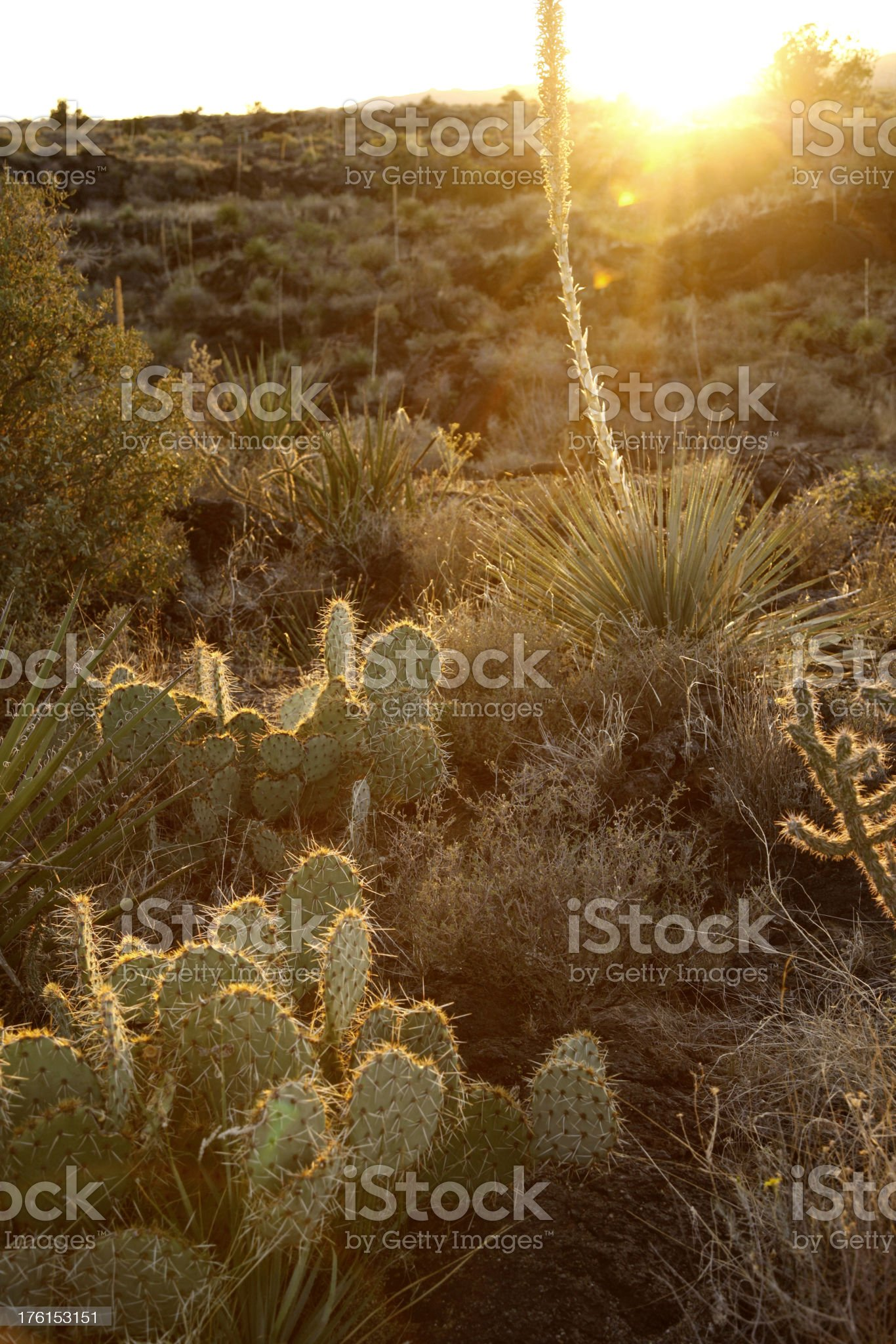 Sunset at Valley of Fires Recreation Area in New Mexico royalty-free stock photo