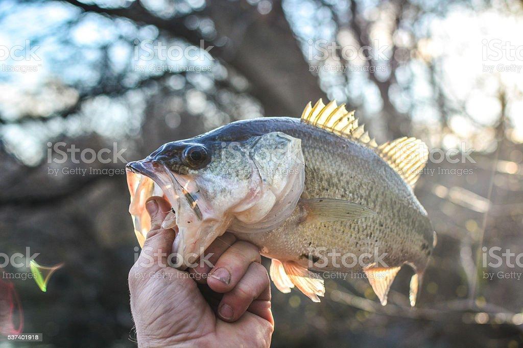 Sunset bass stock photo