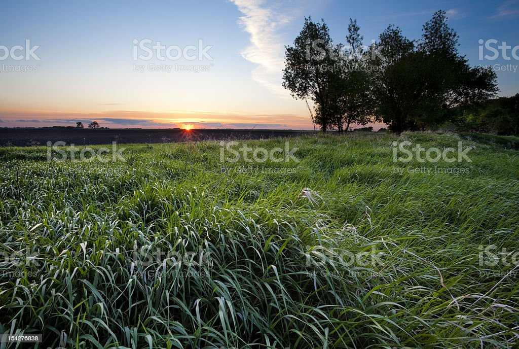 Sunset behind a large field and trees stock photo